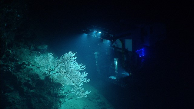 Figure 1. The ROV Deep Discoverer explores the corals of one of the canyons off the east coast of the US from the NOAA Ship Okeanos Explorer.