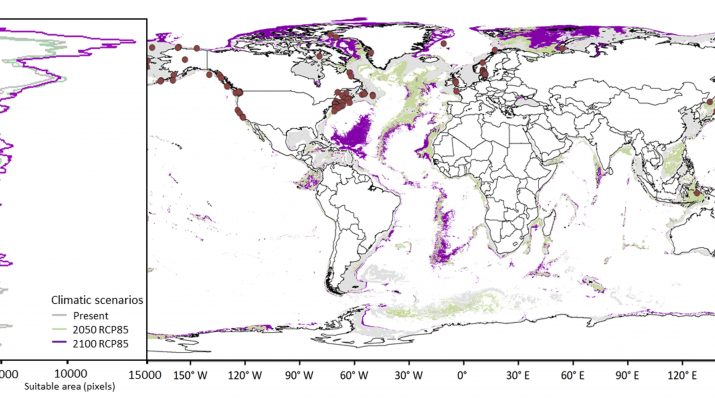 Figure 1. Current and future suitable areas for Hemiarthrus abdominalis (Kroyer, 1840). Histogram (left) shows latitudinal distribution of areas that will become suitable for invasion under different future climatic scenarios (present in grey, 2050 in green and 2100 in purple). Map (right) shows binary layers of suitability and distribution records for H. abdominalis in brown circles (colors correspond to histogram densities).