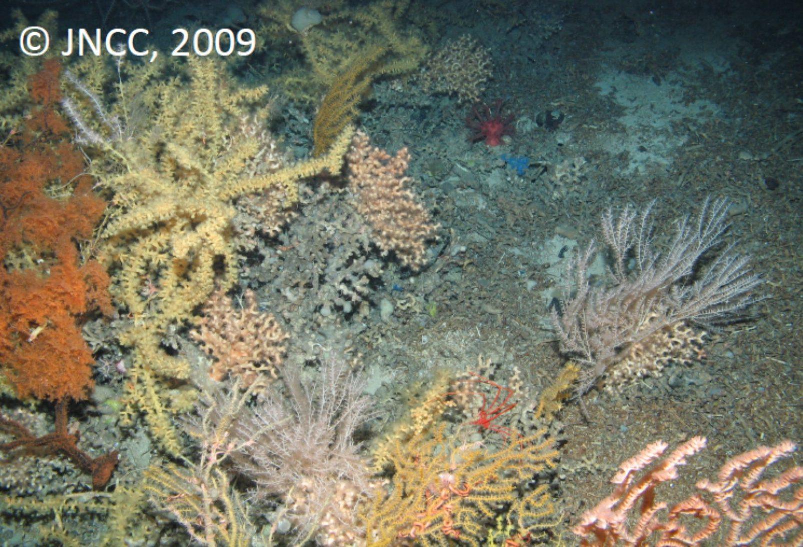 Mixed coral assemblage on Lophelia pertusa reef framework